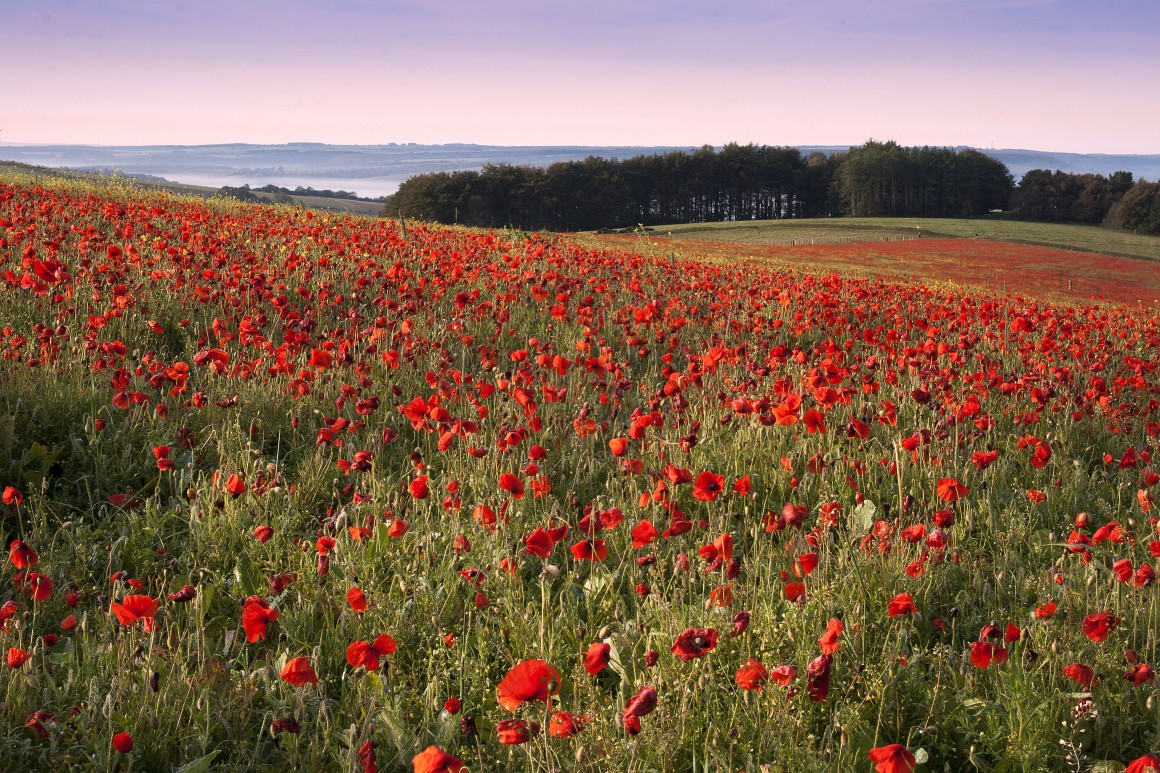 The Poppy Is About Giving Thanks Not Fostering Division The