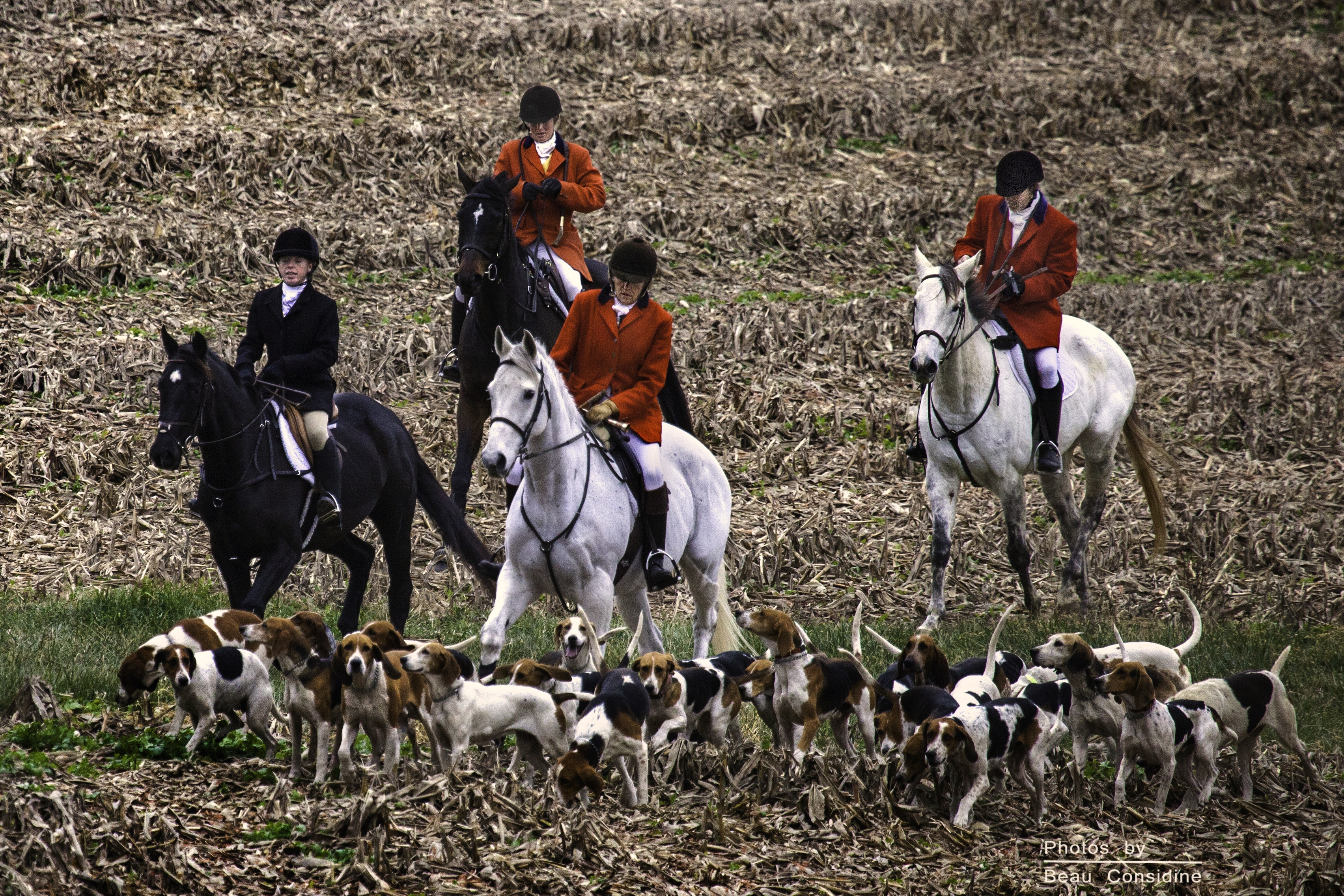 Hunting: cruelty fuelled by human arrogance and elitism