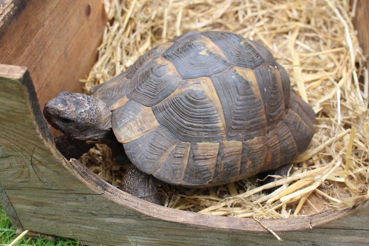 An interview with the Corpus Christi tortoise keeper