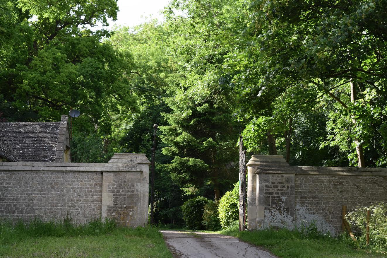 A walk in Wytham Woods