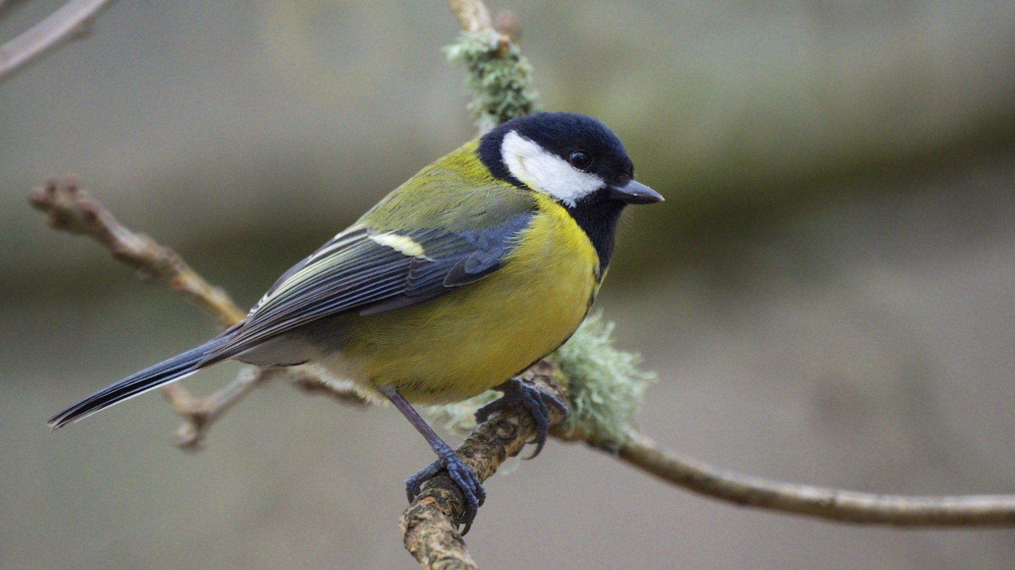 Are birdfeeders changing the shape of birds' beaks?