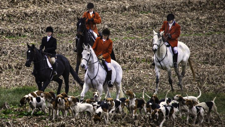 Misguided and futile: time to repeal the Hunting Act